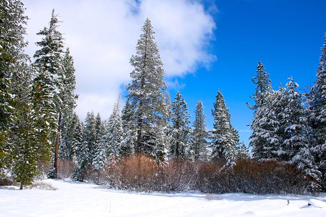 Truckee Snow - Marie Cameron 2015