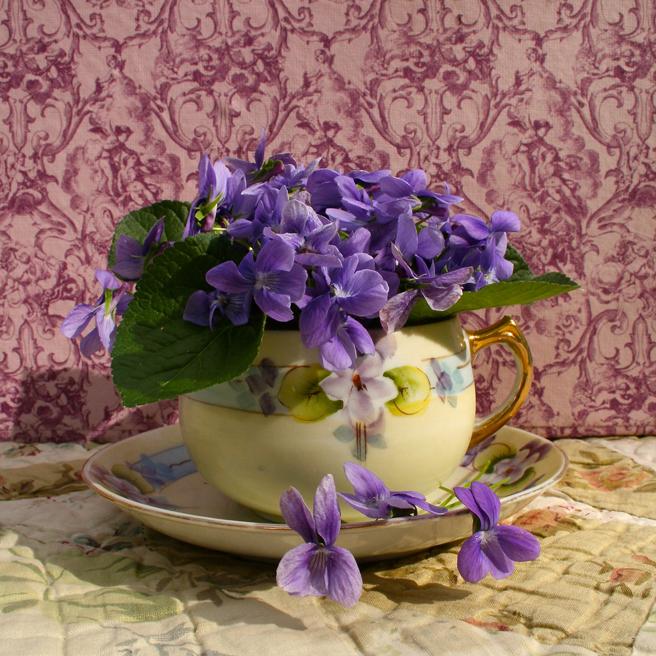 Violet Tea (sans oiseaux) IV- Marie Cameron 2015