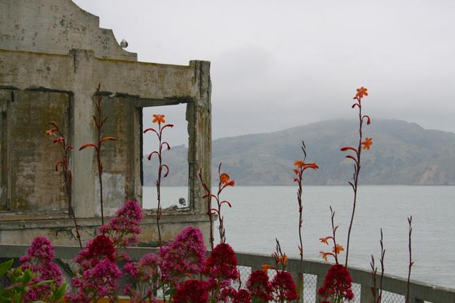 Alcatraz - Flowers