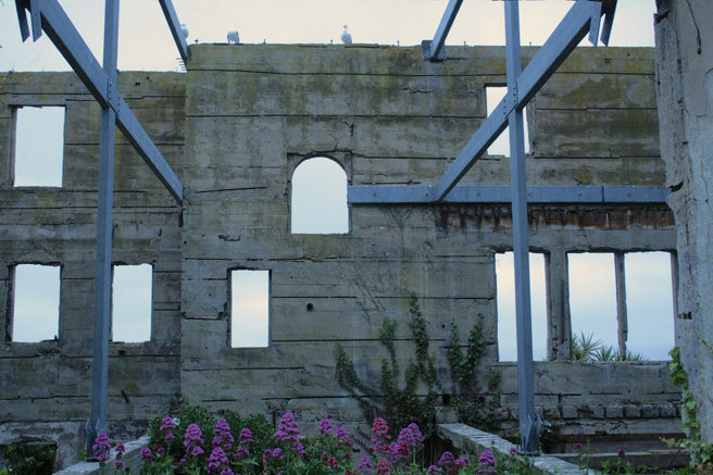 Gulls in the flowering ruins
