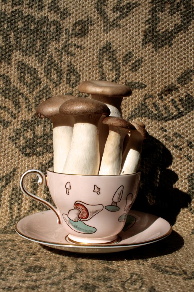 Mushroom Teacup Reference