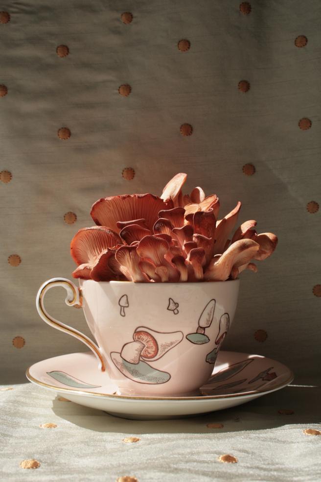 Pink Mushroom Tea