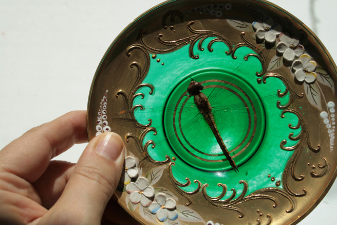 Dragonfly and Bohemian Demitasse Saucer - photo Marie Cameron 2015