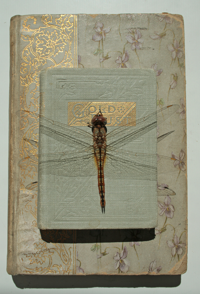 Dragonfly and Gold Dust - photo Marie Cameron 2015
