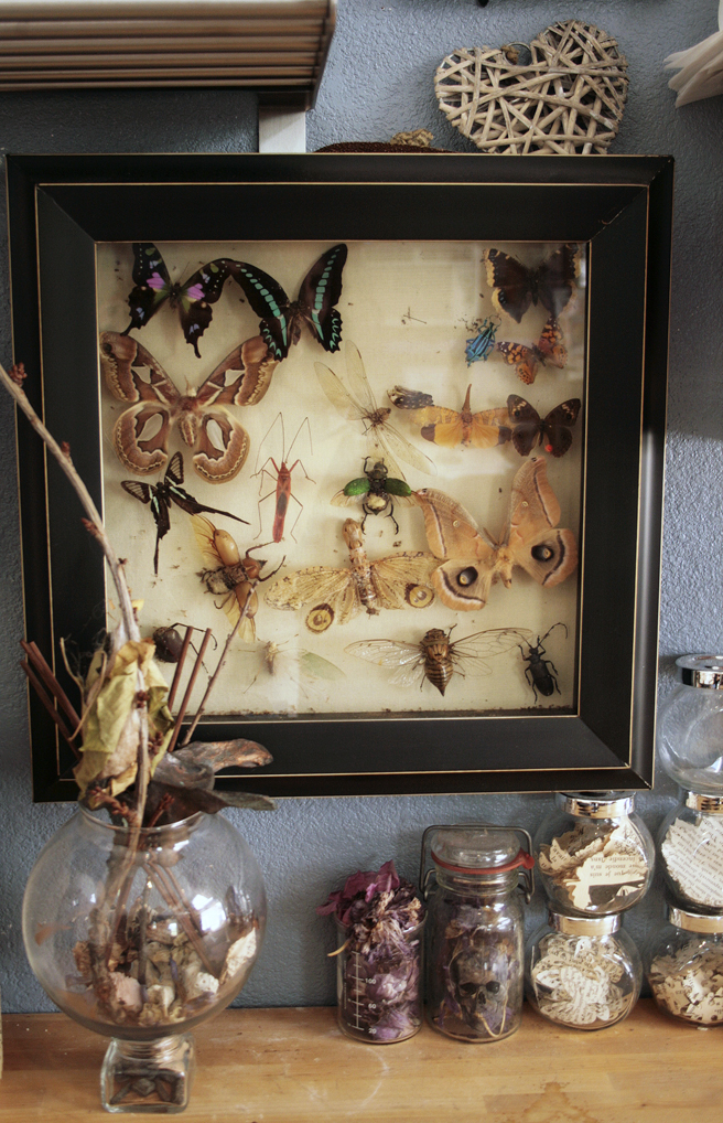 Shannon Amidon Studio Visit - butterflies and beetles photo Marie Cameron 2015