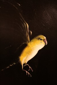 What The Triton Means To Me - George Rivera - Precipice - Triptych oil on canvas 2005-20015 bird detail - photo Marie Cameron 2015
