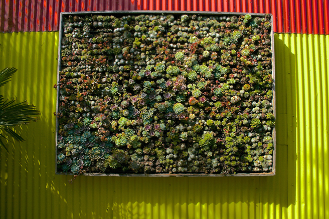Flora Grubb Gardens - succulent panel - photo Marie Cameron 2015