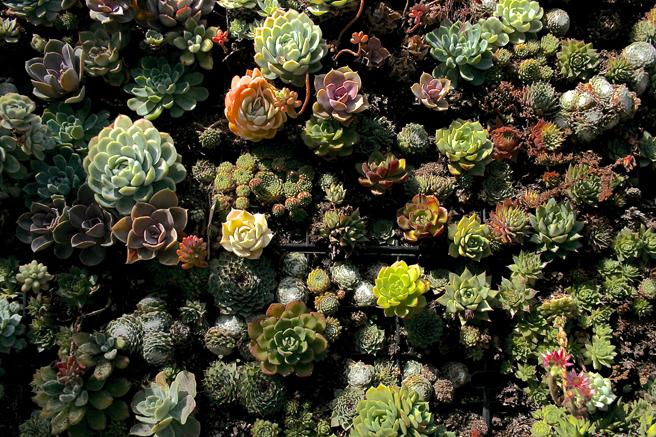 Flora Grubb Gardens - succulent wall - photo Marie Cameron 2015