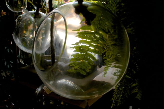 Flora Grubb - Hanging Aerium - photo Marie Cameron 2015