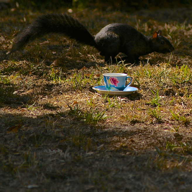 Squirrel with teacup - photo Marie Cameron 2015