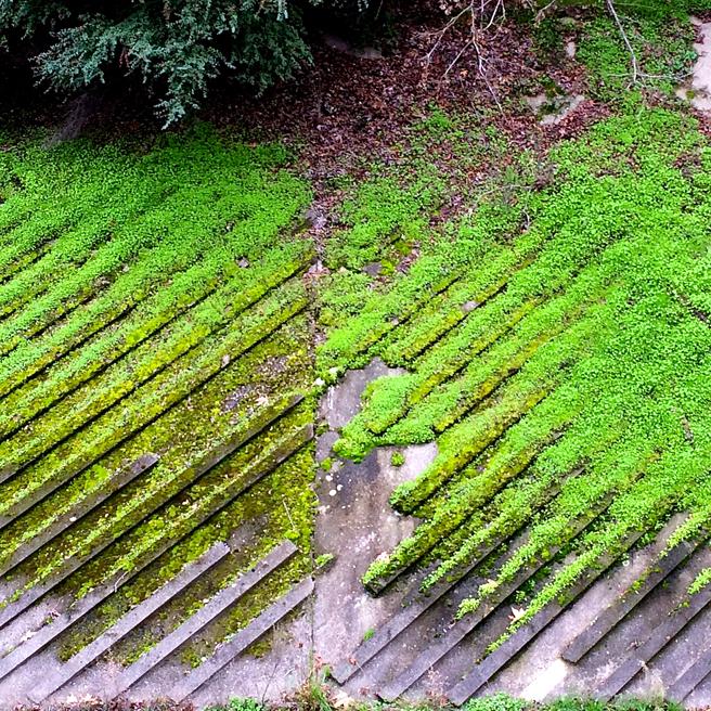 Diagonal Moss - Marie Cameron 2016