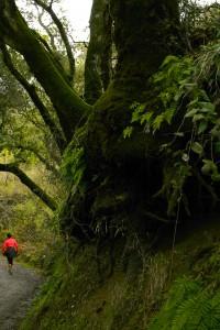 Novitiate Trail Hiker- Marie Cameron 2016