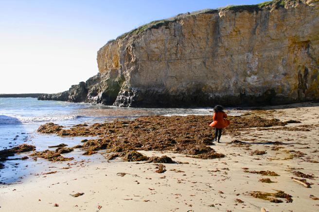 Shark's Tooth Cove - Marie Cameron Inspecting Seaweed  1 - OP 2015