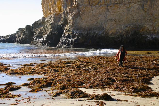 Shark's Tooth Cove - Marie Cameron Inspecting Seaweed  2 - OP 2015