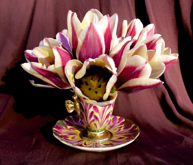 Tulip Demitasse 3 - Marie Cameron 2016
