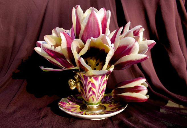 Tulip Demitasse 4- Marie Cameron 2016