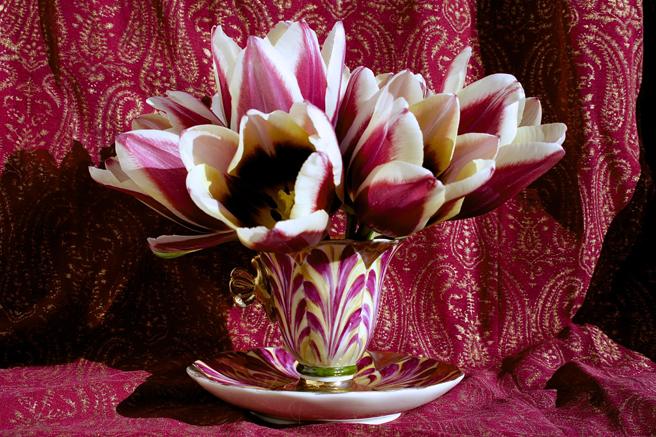 Tulip Demitasse 5 - Marie Cameron 2016