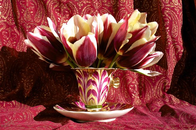 Tulip Demitasse 6 - Marie Cameron 2016