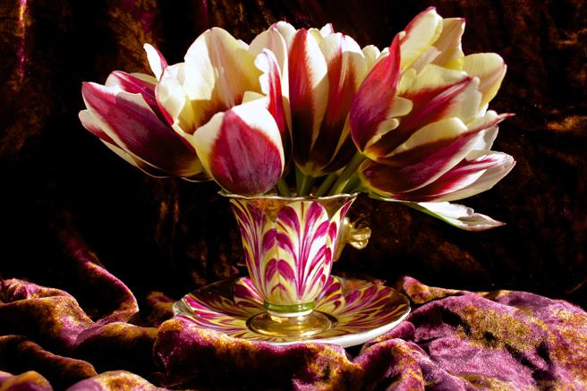 Tulip Demitasse 8 - Marie Cameron 2016
