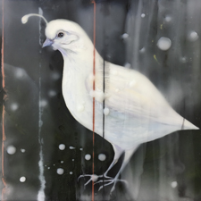 Fade to White - California Quail - oil and encaustic on panel - 6x6 in - Marie Cameron - 2017 sm