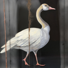 Fade to White - Canada Goose - oil and encaustic on panel - 6x6 in - Marie Cameron - 2017 sm