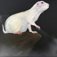 Fade to White - Prairie Dog - oil and encaustic on panel - 6x6 in - Marie Cameron - 2017 sm