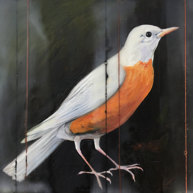 Fade to White - Robin - oil and encaustic on panel - 6x6 in - Marie Cameron - 2017
