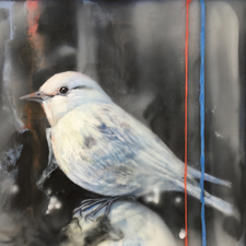 Fade to White - Western Bluebird - oil and encaustic on panel - 6x6 in - Marie Cameron 2017 sm