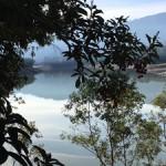LG Creek Trail 13 - Marie Cameron 2017 web sm
