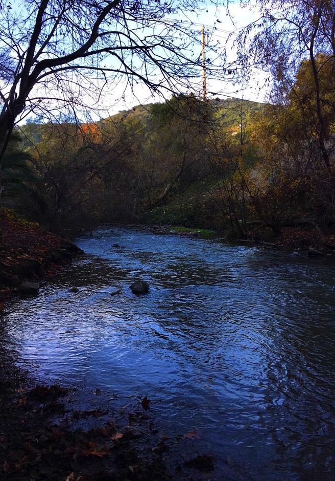 LG Creek Trail 17 - Marie Cameron 2017 web